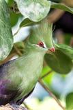 Fågelsammanträde på trädfilial parkerar in arkivbilder