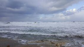 Fågelseagulls ovanför det stormiga havet Royaltyfri Fotografi