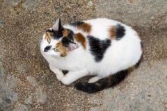 Fågelsikt av en katt som ner ligger på en vagga Arkivfoto