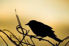 fågelsilhouette royaltyfri bild