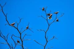 Fågelsittpinne på det torra trädet Fotografering för Bildbyråer