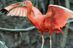 fågelskogregn Arkivbilder