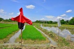 Fågelskrämma i risfältfältet Fotografering för Bildbyråer