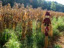 Fågelskrämma på cornfielden Royaltyfri Fotografi