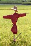 Fågelskrämma på risfältet Arkivfoto