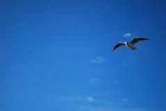 fågelsky arkivfoto