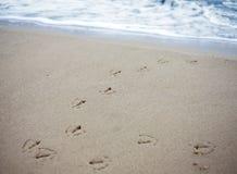 Fågelspår i sand av en strand. Arkivfoton