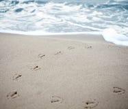 Fågelspår i sand av en strand. Arkivfoto