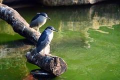 Fågelställning på trät arkivfoto