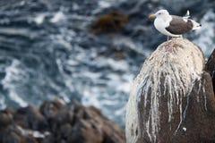 fågelstående s Arkivfoto