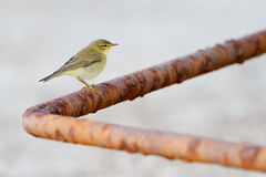fågelstaket Royaltyfri Foto