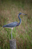 fågelstaketstanding Royaltyfria Foton