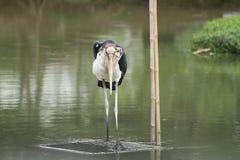 fågelstanding Royaltyfria Bilder