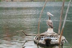 fågelstanding Arkivbild