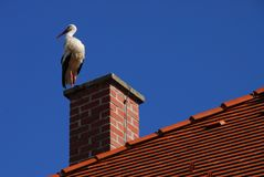 fågelstanding fotografering för bildbyråer