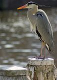 fågelstolpe Arkivfoton