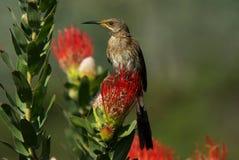 fågelsuger Royaltyfri Fotografi