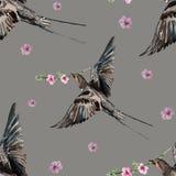 Fågelsvala som blomstrar persikan, vattenfärg Arkivbild