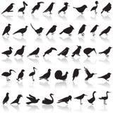 Fågelsymbolsuppsättning Royaltyfri Bild