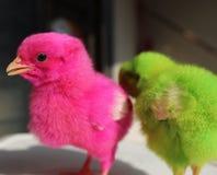 fågelungar Arkivfoton