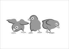 3 fågelungar Royaltyfri Foto
