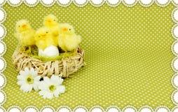 fågelungar easter Royaltyfri Fotografi