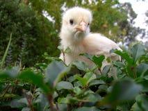 fågelunge Royaltyfri Fotografi