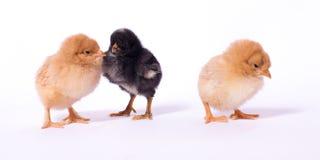 Fågelunge i en grupp Arkivfoton
