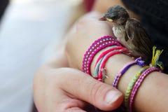 Fågelunge som rymms Arkivfoto