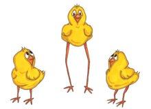 fågelungefamilj Arkivbild