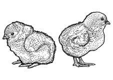 Fågelungeillustration, teckning, gravyr, linje konst Royaltyfri Illustrationer