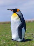 fågelungekejsarepingvin Arkivbilder