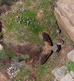 fågelungetornfalk royaltyfri bild