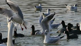 Fågeluppförande lager videofilmer