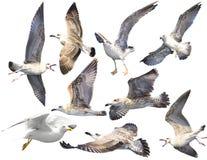 Fågeluppsättning som isoleras på whiteÑŽ fotografering för bildbyråer