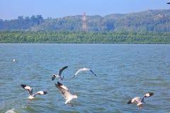 Fågelvatten royaltyfri fotografi