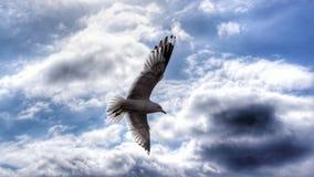 Fågelvingar Royaltyfri Fotografi