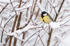 fågelvinter Royaltyfri Fotografi