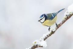 fågelvinter Arkivbilder