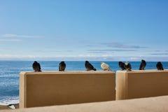 Fåglar är kalla vid havet duvor royaltyfri bild