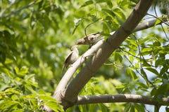Fåglar äter Arkivfoto