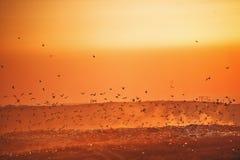 Fåglar över en avskrädenedgrävning av sopor på solnedgången Fotografering för Bildbyråer