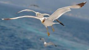 fåglar Arkivfoton