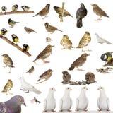 fåglar Arkivbilder