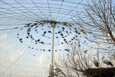 fåglar Royaltyfria Bilder