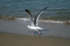 fåglar Arkivfoto