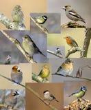 fåglar Royaltyfri Foto
