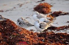Fåglar av en fjäder Arkivfoton