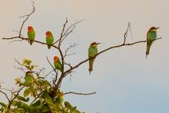 Fåglar av en fjäder royaltyfri bild