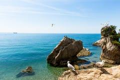 Fåglar av havet Royaltyfria Bilder